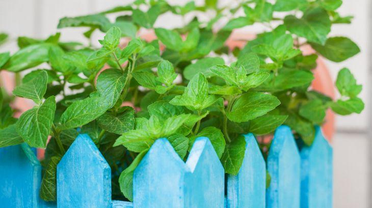 Jakie rośliny można uprawiać na balkonie?